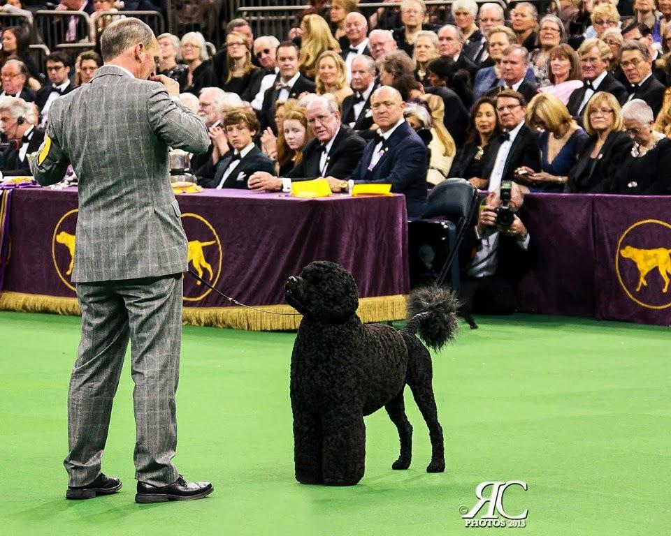 Dog Show Romulus Ny