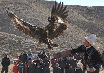 A Kyrgyz berkutchi (eagle hunter) releases his bird, a golden eagle, during the hunting festival Salburun in the village of Bokonbayevo some 300 km outside Kyrgyzstan's capital Bishkek on November 9, 2013