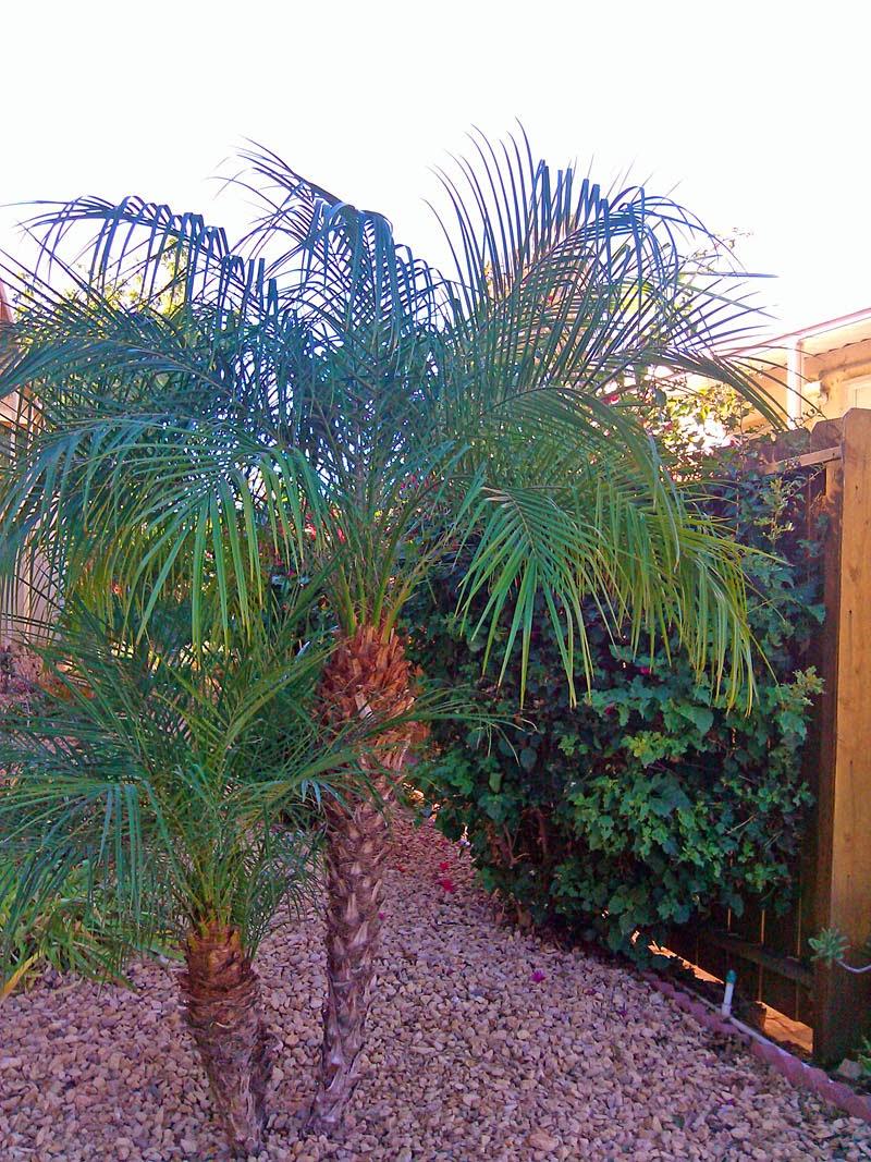 palm trees in san diego greg in san diego
