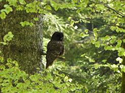 Birding in Slovenia