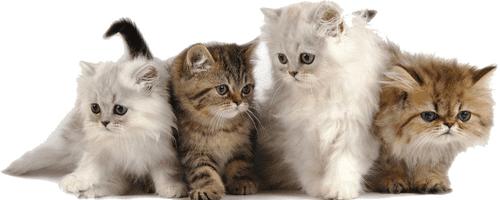10 choses à savoir avant d'adopter un chaton