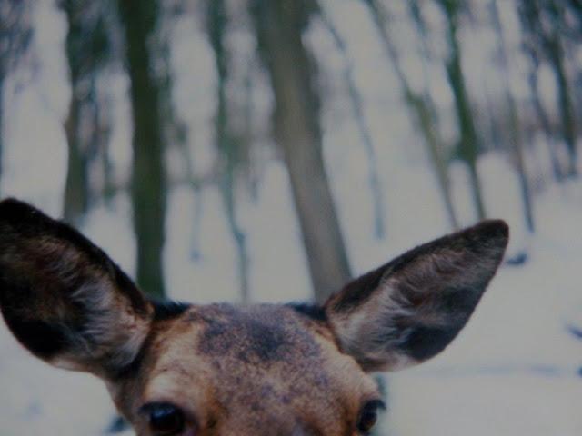 Hohenstein Witten Hunderunde Ruhrgebiet Ruhrpott Wanderung Wandern Winter Schnee Analog Wildtiergehege