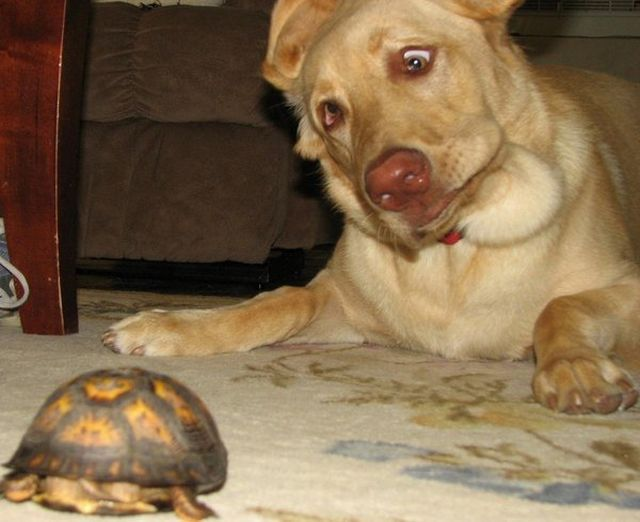 funny animals, dog seeing tortoise