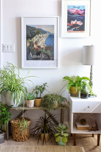 plants make a healthy home