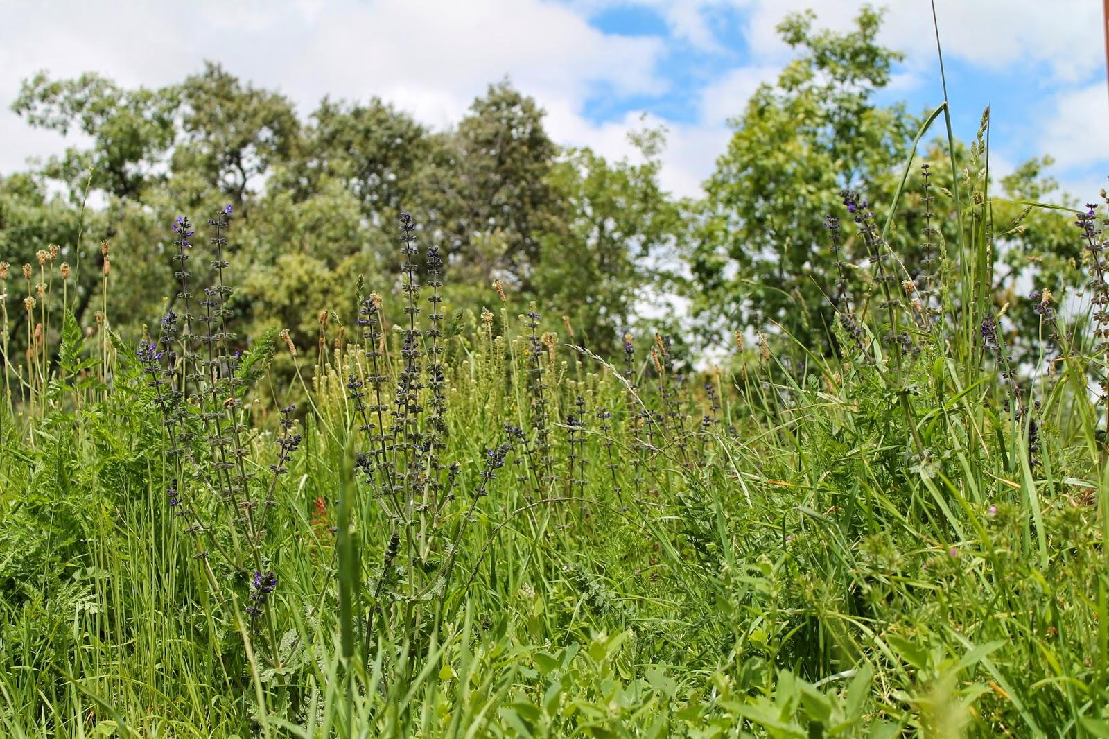 ARAÑAZOS EN EL CIELO: Una simple pradera