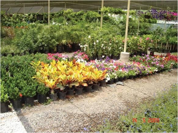 Agricultura protegida for Produccion de plantas ornamentales