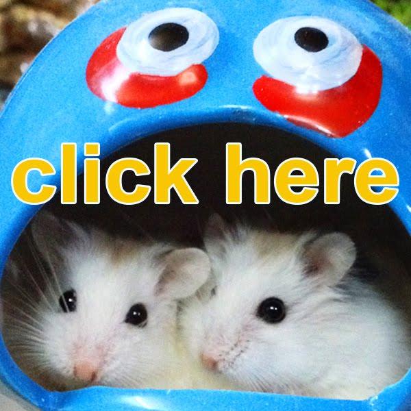 Shop hamster yahu HCM