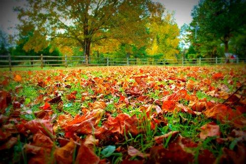 Fall leaves south carolina