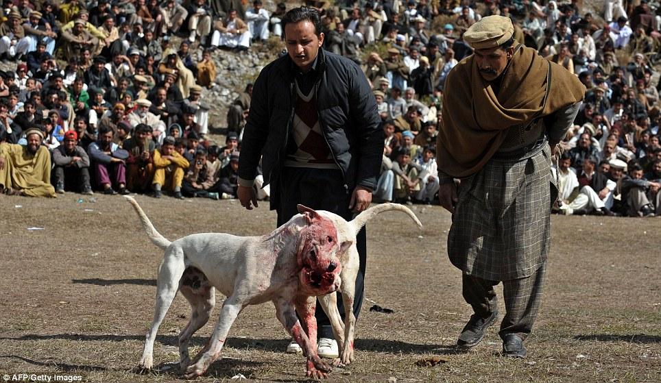 Guard Dog Sale Pakistan