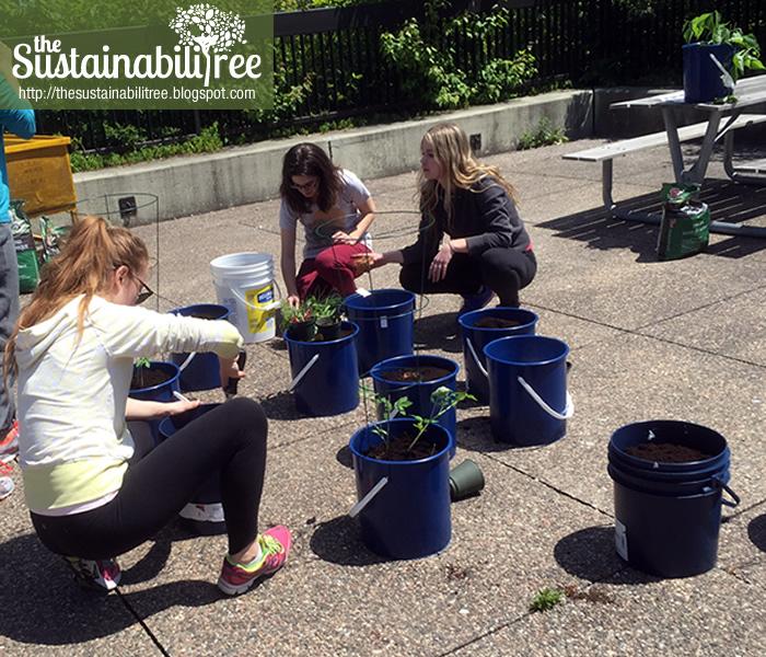 Volunteers plant seedlings in reused buckets