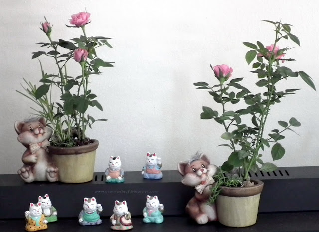 Cats and mini-roses