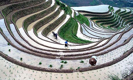 His 111 world civ i for Terrace farming model