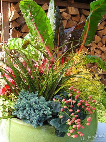 мангольд, огород, декоративное растение, дизайн, украшение огорода, на клумбах, флористика