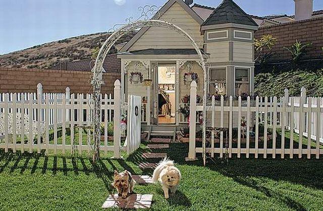 Tammy Kassis Dog House