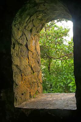 El Yunque: Mt. Britton Trail