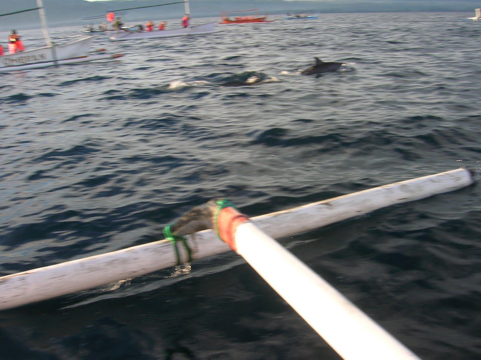 Delfines en Lovina, Isla de Bali,Indonesia, vuelta al mundo, round the world, La vuelta al mundo de Asun y Ricardo