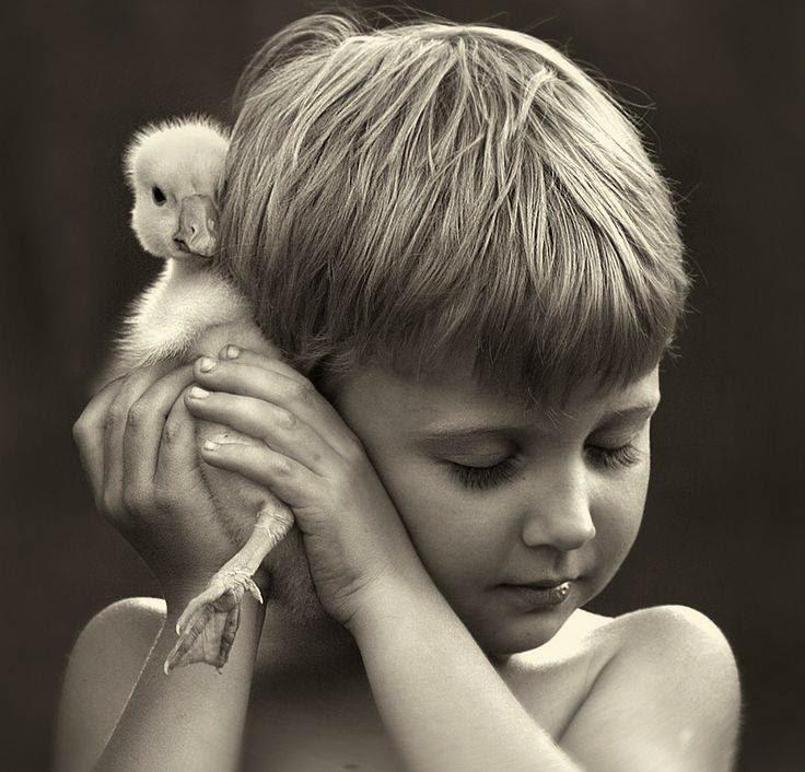 Inteligencia emocional y psicología de la cooperación