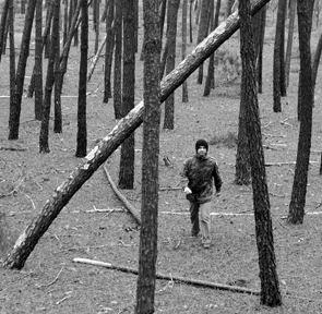 Zito Colaço ao encontro das Árvores do Amor - As Árvores Misteriosas da Caparica