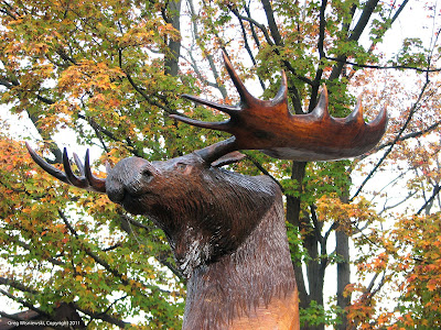 Full Circle Group Benefits Moose Head Carving