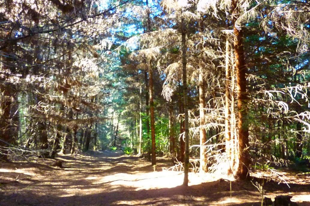 Stoodley arboretum, Railton