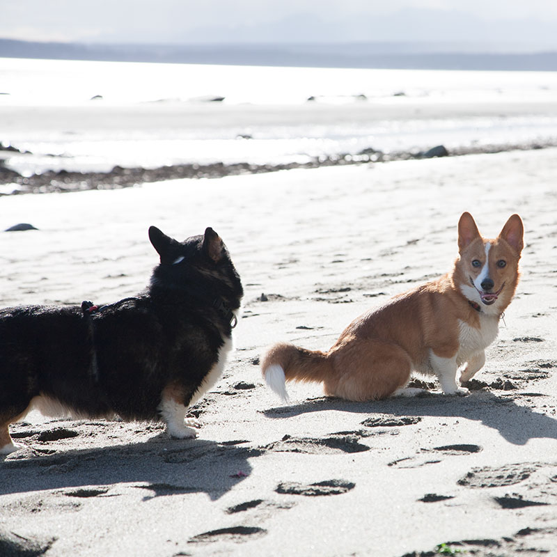 Dogs at double bluff off leash dog beach