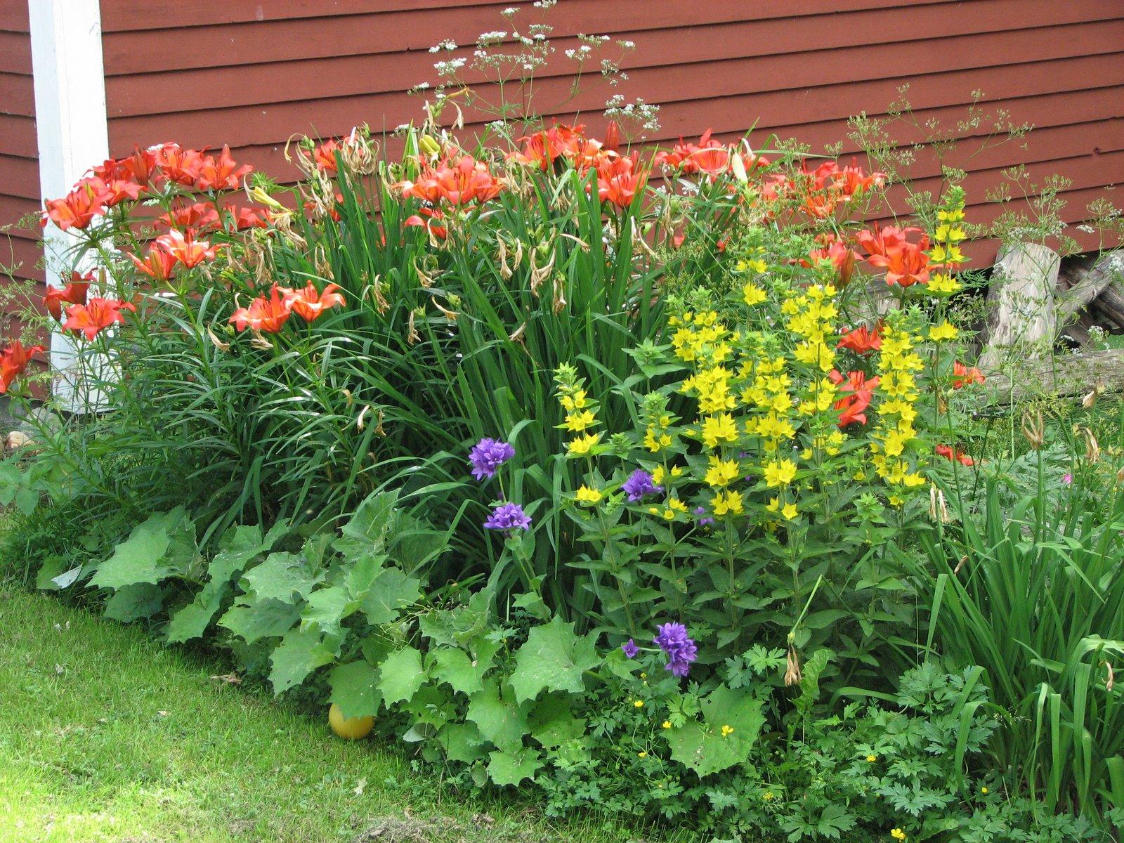 Trädgårdsprinsessans dagbok: rabattdesign