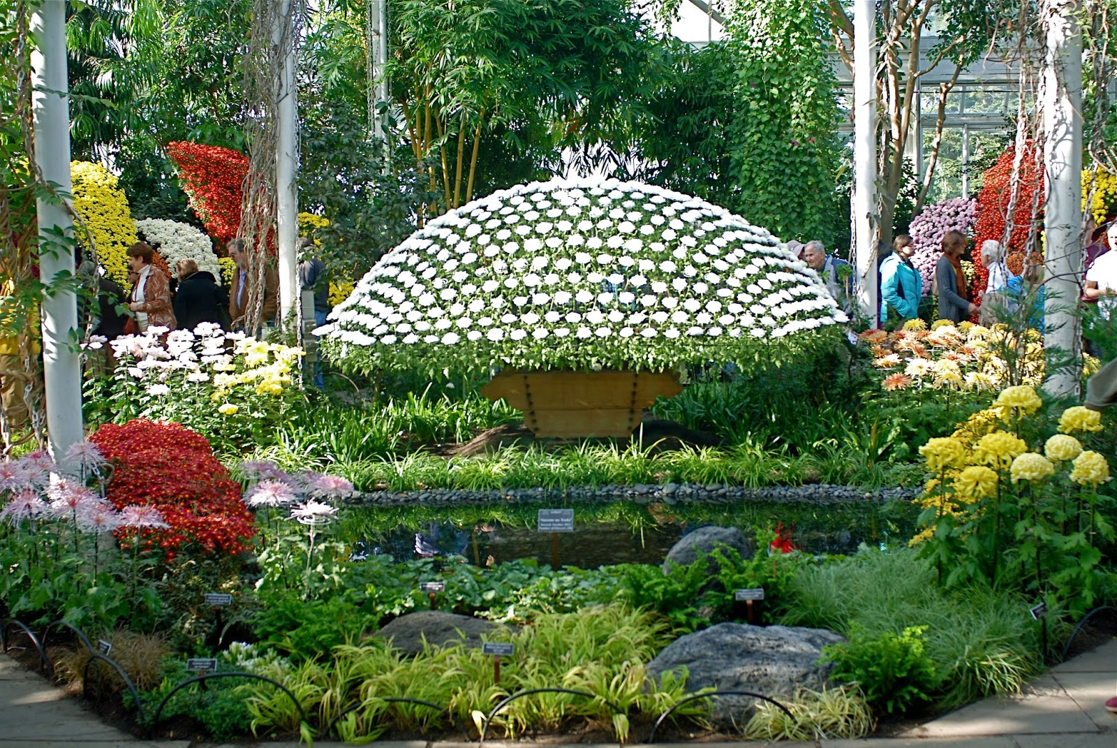Nyc nyc the art of the japanese chrysanthemum at the for Japanese botanical garden