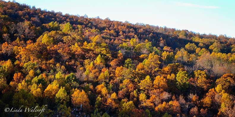 looking down on autumn trees