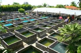 Business opportunities fishery fish farming part 2 for Fish farming business