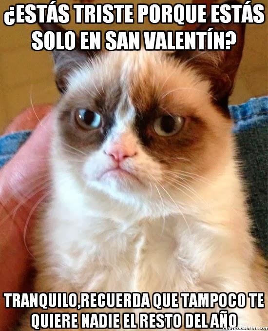 Grumpy Cat - El gato gruñón: ¿Estás triste porque estas solo en San Valentín?
