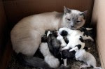 Cats nurse orphaned pups