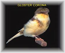 Gloster Corona