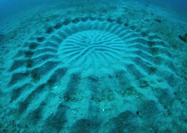 Удивительные круги появляющиеся на морском дне