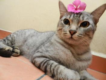 Meow-Meow Pucci