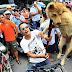 Παγκόσμια κατακραυγή για το φεστιβάλ σφαγής χιλιάδων σκύλων και γατών