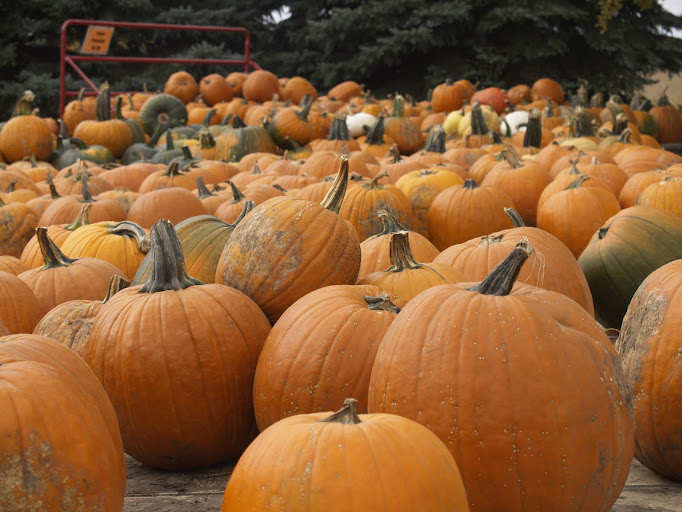The best fall venues for picking pumpkins and apples around Des Moines