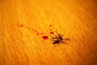 Wanita Pembunuh 4 Juta Nyamuk