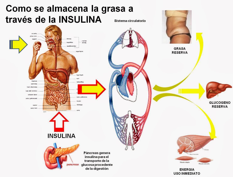 Diabetes Causas efectos y como controlarla: que es la insulina