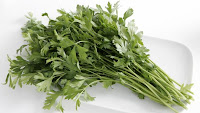 Parsley | Garden Parsley | Petroselinum Crispum