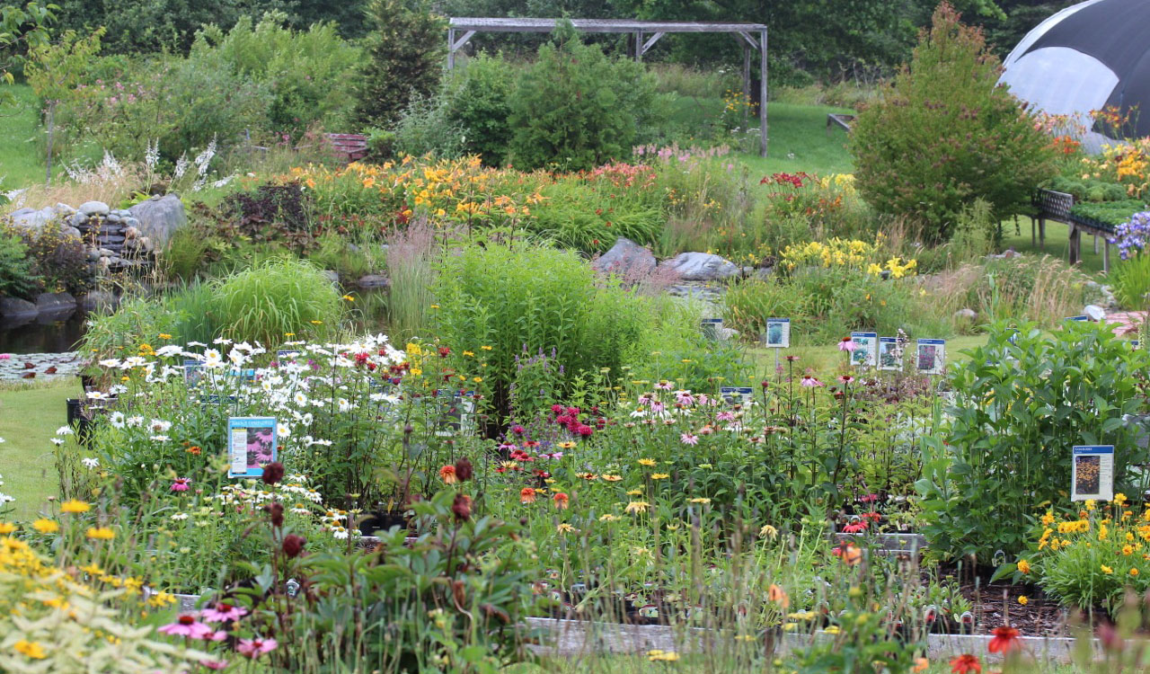 Bloomingwriter Gardening In Nova Scotia Great Nurseries In Nova