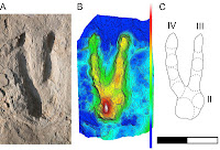 http://sciencythoughts.blogspot.co.uk/2012/03/dinosaur-footprints-from-early.html