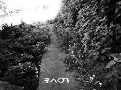 El camino correcto te lo dicta el corazón, no siempre es la mente, la que lleva la razón.
