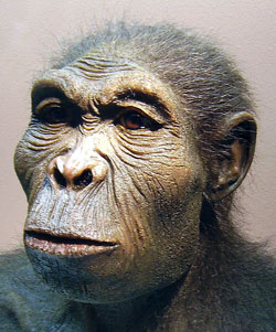Scientific reconstruction of a Homo habilis