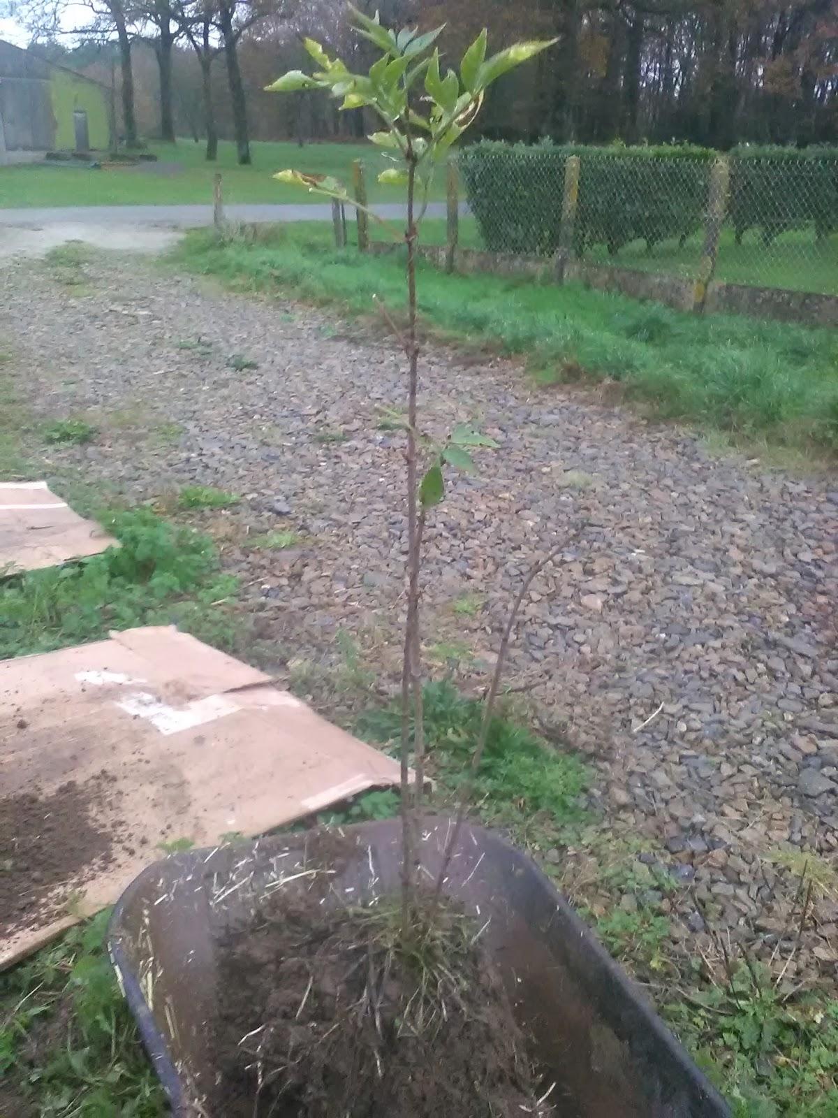 A pousse en morbihan planter des arbres - Plantation arbre en motte ...