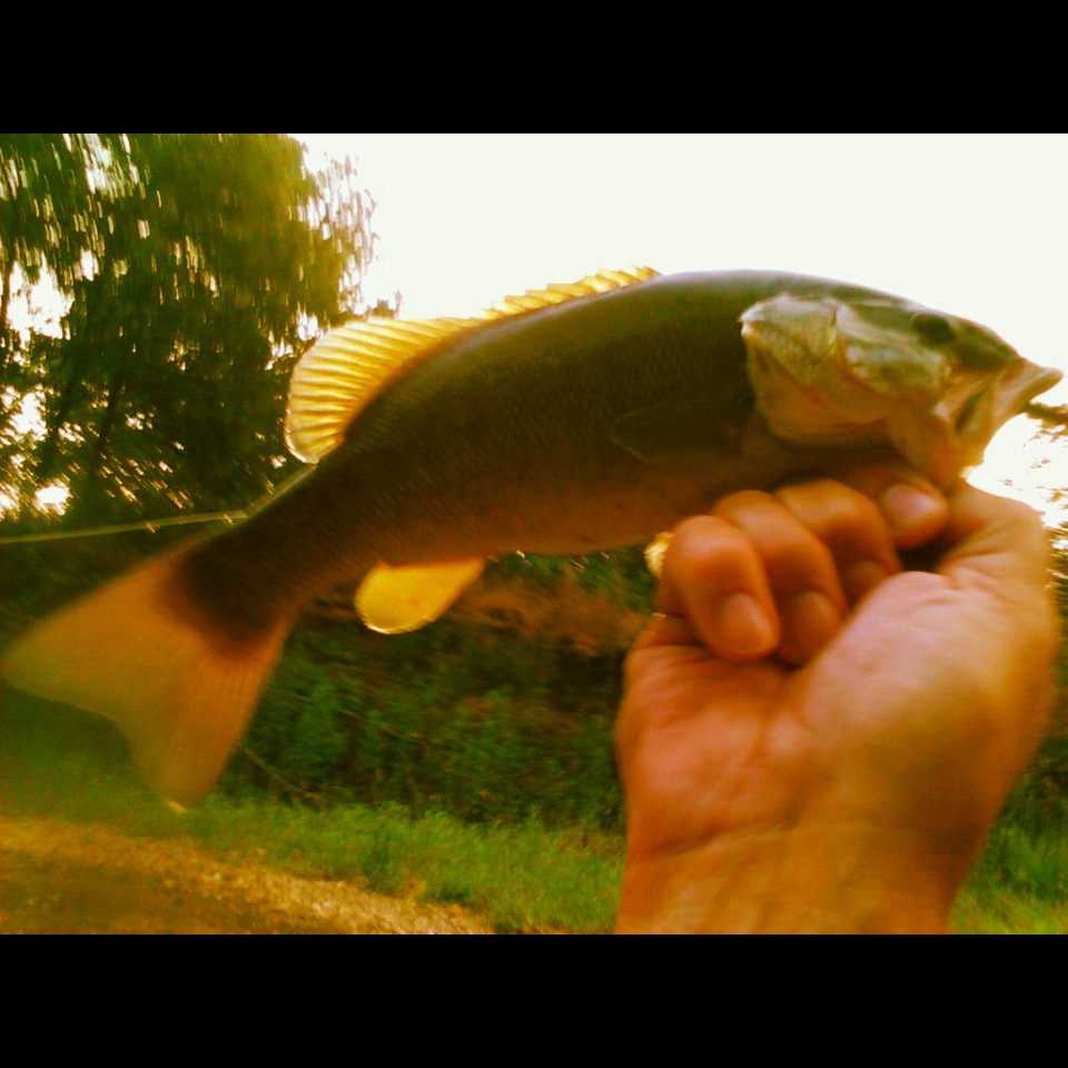 Buggin 39 out yup you got it more smallmouth bass for Fly fishing for smallmouth bass
