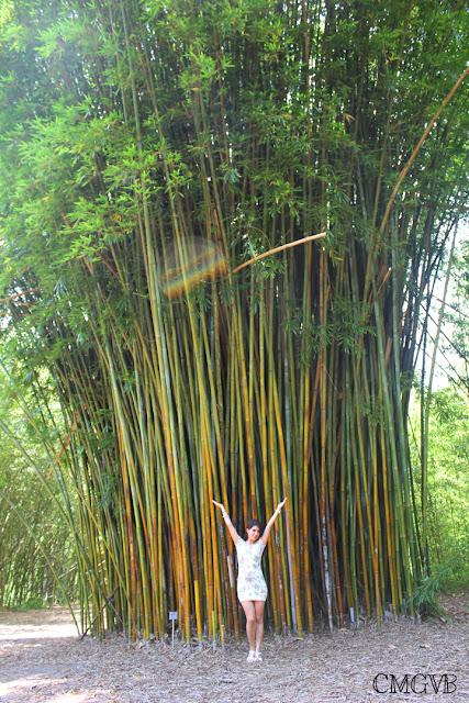 diana dazzling, fashion blogger, cmgvb, como me gusta vivir bien, Kanapaha Botanical Gardens, garden, flowers, Gainesville, bamboo