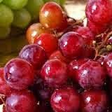 budidaya anggur organik nasa
