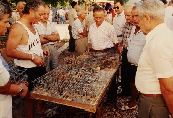 http://chajurdo.blogspot.com.es/2010/01/la-caza-ilegal-de-aves-en-malta.html