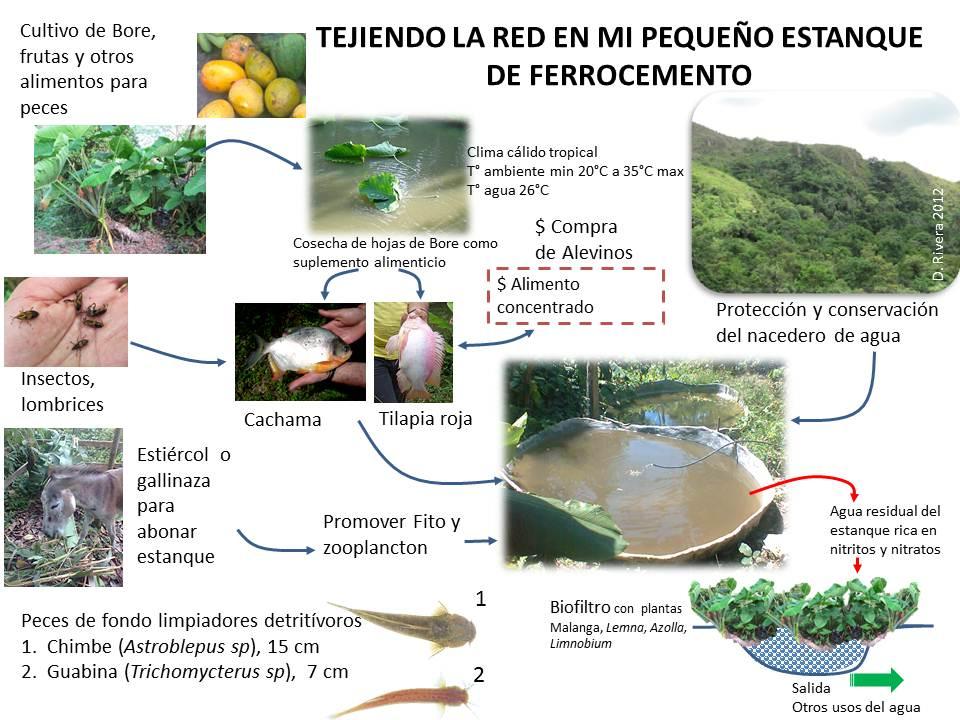 Reserva natural victoria tejiendo la red en mi estanque for Piscicultura tilapia roja