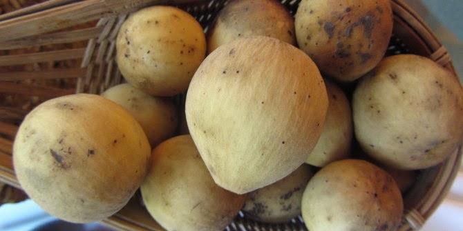 Inilah khasiat buah duku yang jarang diketahui